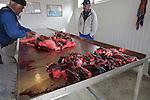 village de Qaqortoq fondé par Erik Le rougevillage de Qaqortoq fondé par Erik Le rouge..retour de chasse au phoque