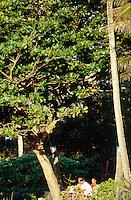Kelly Slater (USA), North Shore, Hawaii..photo:  joliphotos.com