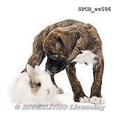 Xavier, ANIMALS, REALISTISCHE TIERE, ANIMALES REALISTICOS, FONDLESS, photos+++++,SPCHWS596,#A#