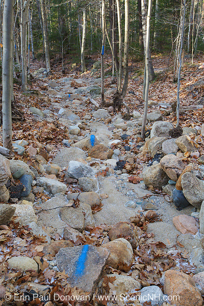 Blue trail blazing painted on rocks along Maggie's Run Trail in Crawford Notch State Park of the New Hampshire White Mountains.