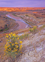 The sunrises over the  Little Missouri River and Rabbitbush in September bloom at Theodore Roosevelt National Park, North Dakota