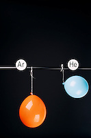 HELIUM AND ARGON FILLED BALLOONS<br /> (Variations Available)<br /> The Two Balloons Are Filled To The Same Volume<br /> After 12 hours the helium filled balloon is smaller than the Argon filled balloon. Helium effuses out of the balloon faster than Argon.  Light atoms or molecules effuse through the pores of the balloons faster than heavy atoms or molecules.