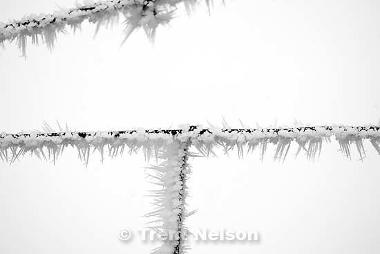ice on barb wire fence. shots in Tooele and Rush Valley<br />