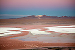 Altiplano, Bolivia , Seven Color Mountain, Laguna Colorada, flamingos, Eduardo Abaroa Andean Fauna National Reserve