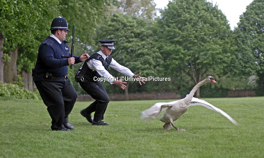 BNPS.co.uk (01202 558833)<br /> Pic: UniversalPictures<br /> <br /> Simon Pegg and Nick Frost chase a swan in a scene from Hot Fuzz.<br /> <br /> This is the hilarious moment two police officers captured a runaway swan - by throwing a hi-vis jacket over it.<br /> <br /> Bemused motorists reported seeing the stray water bird waddling along a pavement next to a busy road in Christchurch, Dorset, during rush hour.<br /> <br /> PC Mel Rooney and PC Dan Meeks used his bright yellow coat to throw over the bird in order to trap it.