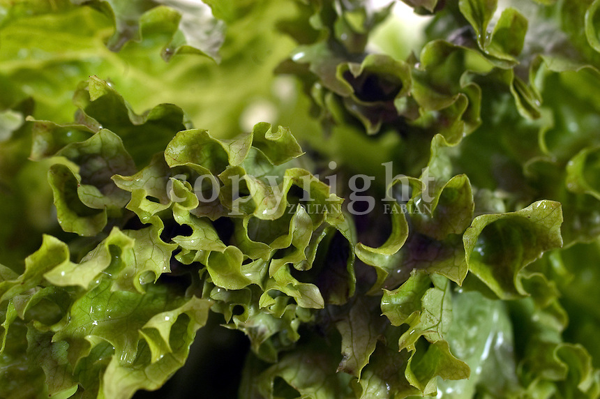 Close up of a green salad