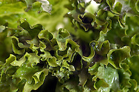 Close up of a green salad