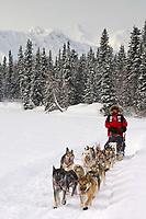 Paul Gebhardts sled dog team on trail near Finger Lake Chkpt Finger Lake 2006 Iditarod Alaska Winter
