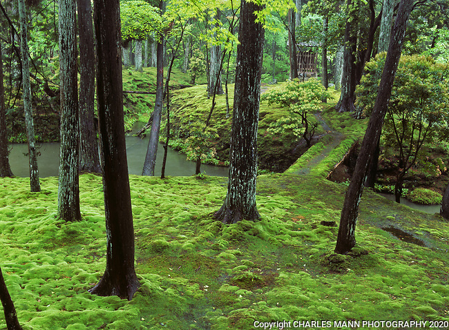 Saihoji Temple, also known as Kokadera, or the Moss Temple, is a  serene and ethereal 900 year old garden in the Arashyama District of Kyoto,Japan.