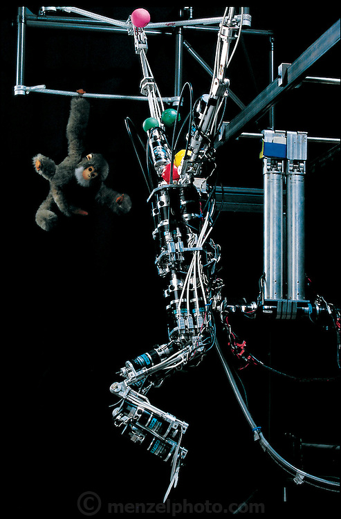 """Hanging from a network of cables, Brachiator III quickly swings from """"branch"""" to """"branch"""" like the long-armed ape it was modeled on. (Brachiator refers to """"brachiation,"""" moving by swinging from one hold to another.) The robot, which was built in the laboratory of Toshio Fukuda at Nagoya University (Japan), has no sensors on its body. Instead, it tracks its own movements with video cameras located about four meters away. Brightly colored balls attached to the machine help the cameras discern its position. Brachiator's computer, which is adjacent to the camera, takes in the video images of the machine's progress and uses this data to send instructions to the machine's arms and legs. From the book Robo sapiens: Evolution of a New Species, page 87."""