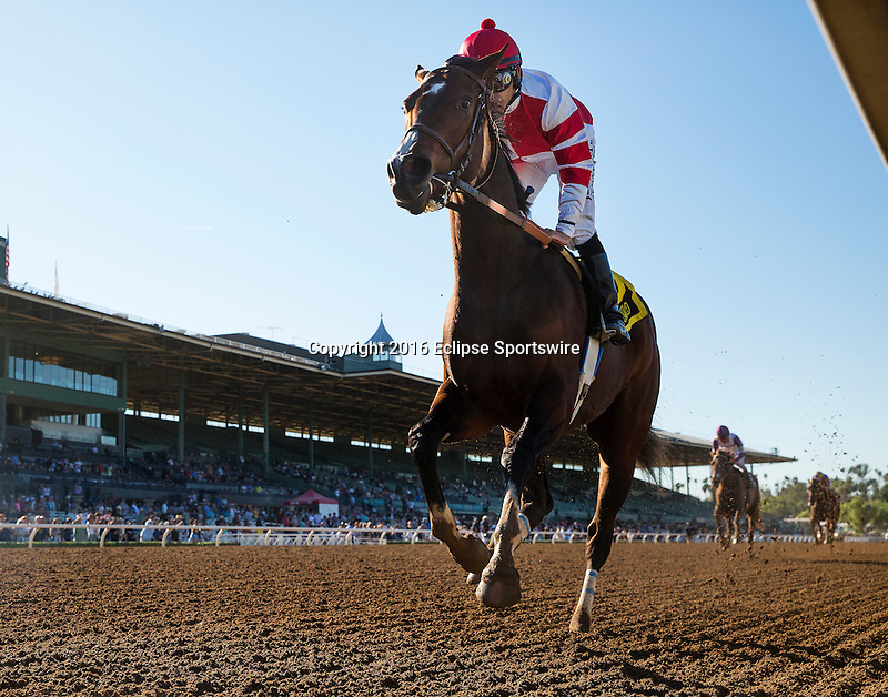 ARCADIA, CA - FEBRUARY 06: Songbird #6, with jockey Mike Smith aboard wins the Las Virgenes Stakes at Santa Anita Park in Arcadia, California on February 06, 2016. (Photo by Evers)