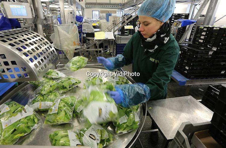 Foto: VidiPhoto<br /> <br /> ZWAAGDIJK-OOST - Groentesnijderij en verpakkingsafdeling van Hessing in Zwaagdijk-Oost. Verse groente wordt na binnenkomst binnen enkele uren gesneden, verpakt en afgeleverd. Hessing is uitgegroeid tot een aanbieder van panklare groenten, AGF-specialiteiten, verse sappen en convenience producten. Het snijden en verpakken wordt uitgevoerd op drie locaties, Zwaagdijk, Uden en Sint Annaparochie. Daarnaast kent Hessing een eigen transportbedrijf, Hessing Logistiek.<br /> In totaal telt Hessing ruim duizend medewerkers. Hessing verwacht wordt uit te groeien naar een top drie positie binnen de Benelux en aangrenzende landen.