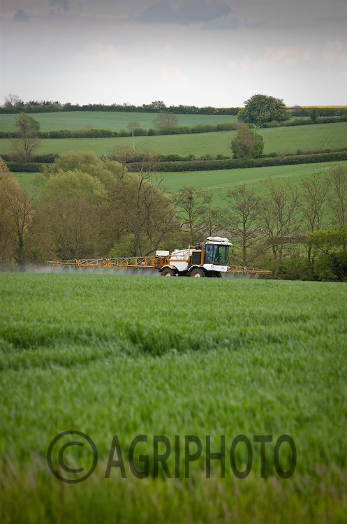 Knight sprayer working in Winter Wheat