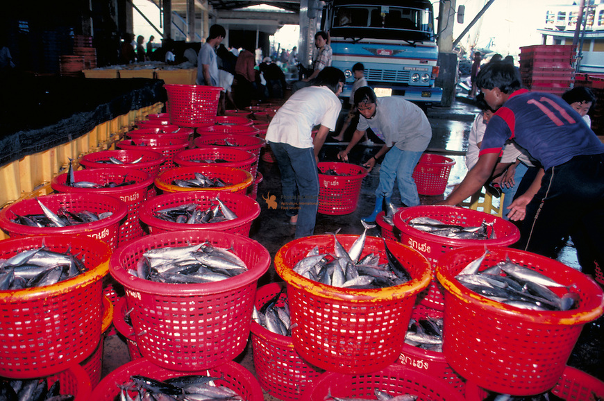 Workers loading fish for processing