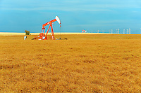 Lentils. Red. Oil pump jacks<br /> Carmichael<br /> Saskatchewan<br /> Canada