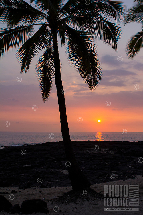 A colorful sunset and coconut trees, Kona Coast, Big Island.