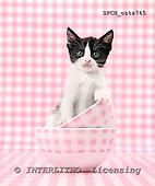 Xavier, ANIMALS, cats, photos+++++,SPCHCATS745,#a# Katzen, gatos