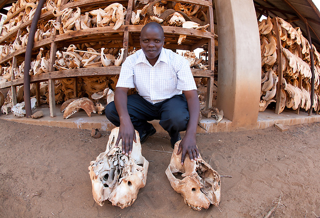KWS headquaters where they store ele. jaws and Rhino skulls