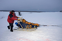 Doug Swingley Runs Up Bank of Yukon River @ Kaltag Chkpt 2005 Iditarod w/Dog in Basket *Nellie*