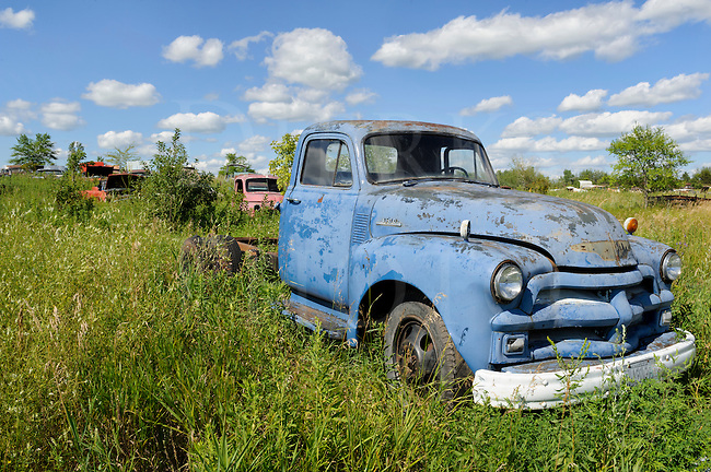 Old blue pickup truck in a junkyard under summer skies in summer weeds, 1950's Chevrolet.