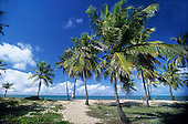 Sauipe, Bahia State, Brazil. Palm trees leading to a perfect sea with puffy white clouds on a bright, sunny day; one woman.