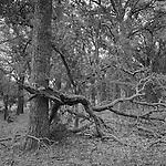 Oak grove.