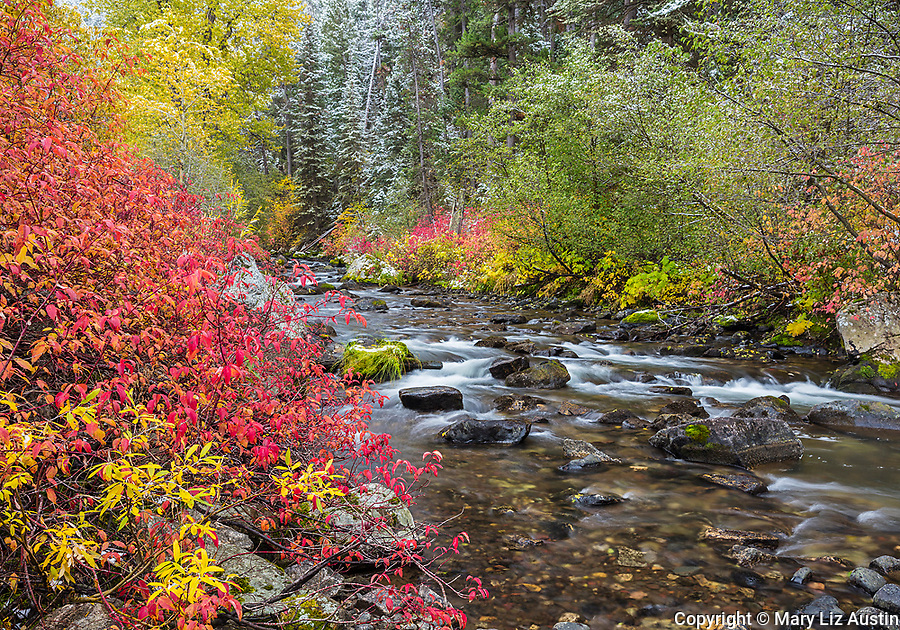 Gallatin National Forest, MT: Fall colors along Hyalite Creek with a fresh dusting of snow