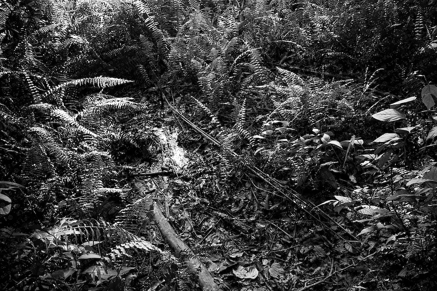 An unbilden waste pit filled with crude oil left by Texaco drilling operations lies in a forest near the town of Lago Agrio.