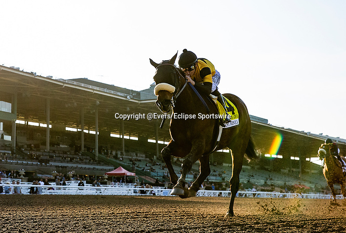 "FEB 15: The ""one-eyed-filly"" Hard not to Love with Mike Smith wins the Santa Monica Stakes at Santa Anita Park in Arcadia, California on Feb 15, 2020. Evers/Eclipse Sportswire/CSM"