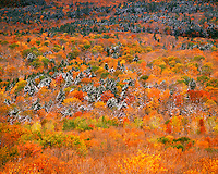 Autumn trees in Porcupine Mountains Porcupine Mountains Wilderness State Park Michigan