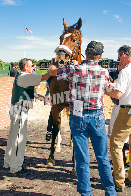 Adrian unsaddling Pontius P at Delaware Park on 9/23/15