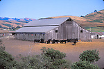 cattle and barn at San Gregorio, CA