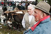 Spancill Hill horse fair. A scene from the Spancill Hill horse Fair Co Clare.At one time, Spancill hill was said to be Ireland's largest fair with buyers from Britain, Russia, Prussia, and France competing to purchase the best stock for their Imperial armies. Recently the fair has been revived and is now going from strength to strength..Spancill Hill is also traditional Irish folk song which bemoans the plight of the Irish immigrants who so longed for home from their new lives in America, many of them who went to America with the Gold Rush.This song is sung by a man who longs for his home in Spancill Hill, his friends and the love he left there.
