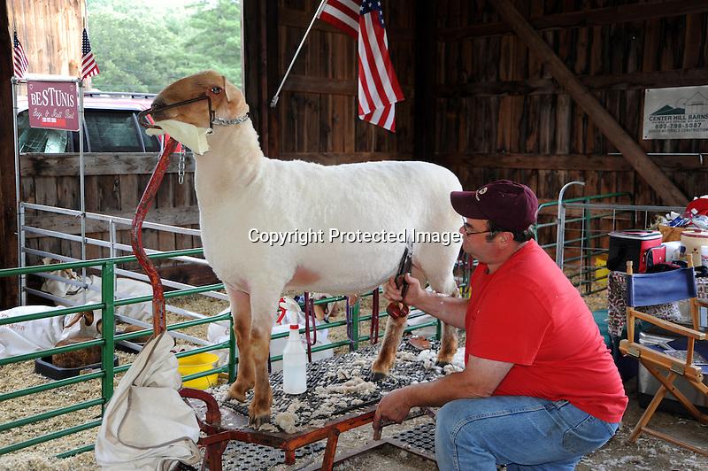 Sheep shearing in Monadnock Barn at Cheshire Fair in Swanzey, New Hampshire USA
