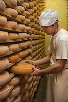 Europe/France/Franche Comté/39 /Jura/Morbier: Affinage du fromage AOP Morbier à la fruitière de Morbier //  France, Jura, Morbier:  making and control of Morbier cheese in an Haut Doubs Dairy <br /> Auto N°: 2013-114