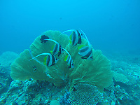 Africa, Madagascar, Nosy Be, Nosy Be Island. Fish while Scuba diving underwater, Mozambique Channel.