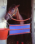 Timely Writer (by Staff Writer) as a three-year-old at Saratoga.  I really tried, but he never did put his ears forward.