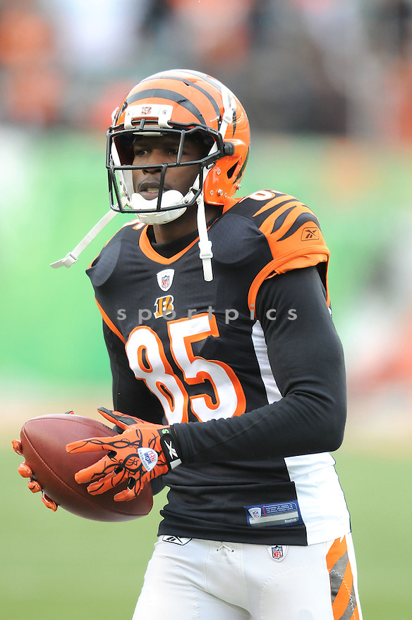 CHAD OCHOCINCO, of the Cincinnati Bengals, in action during the Bengals game against the New York Jets on January 9, 2010 in Cincinnati, OH. Jets won 24-14.