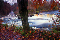 Bonnington Linn and the River Clyde, Falls of Clyde near New Lanark, South Lanarkshire