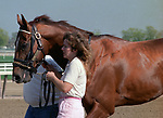 Horse racing; racehorse; Thoroughbred; racetrack, Afleet, stallion, sire, Aqueduct Racetrack, Norcliffe