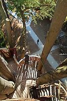 France, Indre-et-Loire (37), Val de Loire classé Patrimoine mondial de l'UNESCO, Langeais, dans les jardins du château de Langeais, cabane perchée dans un cèdre de l'Atlas // France, Indre et Loire, Val de Loire listed as World Heritage by UNESCO, Langeais, in the gardens of the Chateau de Langeais, hut perched in a cedar of the Atlas