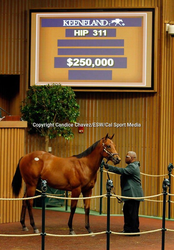 September 15, 2015: Hip 311 Astrology - Hangingbyamoment colt consigned by South Point Sales.  Candice Chavez/ESW/CSM
