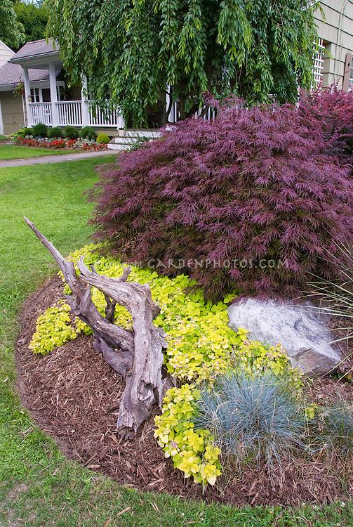 Acer palmatum lamium festuca house plant flower for Maple trees for small gardens