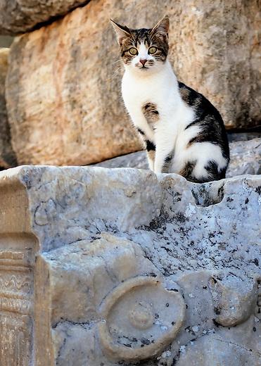 Cat among the ruins of Ephesus