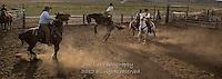 whee HA! Cowboys working and playing. Cowboy Cowboy Photo Cowboy, Cowboy and Cowgirl photographs of western ranches working with horses and cattle by western cowboy photographer Jess Lee. Photographing ranches big and small in Wyoming,Montana,Idaho,Oregon,Colorado,Nevada,Arizona,Utah,New Mexico.