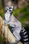 Calgary Zoo. Photo Credit: Sergei Belski