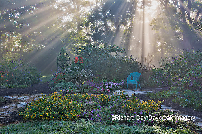 63821-23712 Sun rays in fog in flower garden, Marion Co., IL