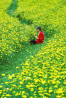 Child in field with dandelions.  Near Monroe, Oregon.