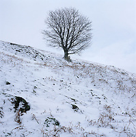 A lone tree is silhouetted against the wintry sky on this snow-covered hillside