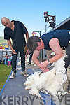 Breda Lynch, Kenmare, in action at the sheep shearing competition at the Caherciveen Music Festival on Sunday..